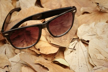 Sunglasses on a background of brown leaves.