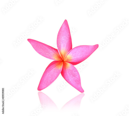 Foto op Canvas Frangipani Blossom of red Plumeria flower, tropical flower, isolated on a w