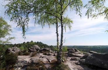 Forêt des trois pignons en ile de France