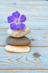 zen stones with purple flower on wooden background