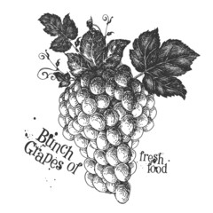 ripe grapes on a white background. sketch