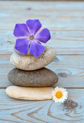 zen stones with purple and daisy flowers on wooden background