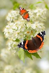 Schmetterling 126