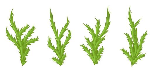 Green plants, bushes vector set.