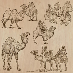 Camels - An hand drawn vectors. Converted