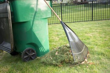 Raking up grass cuttings in spring
