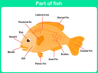 Leaning Parts of fish for kids -  Worksheet
