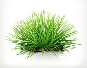 Fresh grass, vector icon