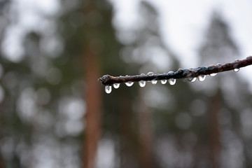 Rain drops on the branch at the fall season