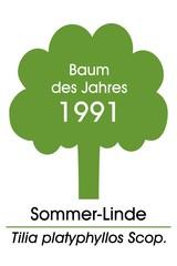 Baum des Jahres 1991 ~ Sommer-Linde / Tilia platyphyllos Scop.