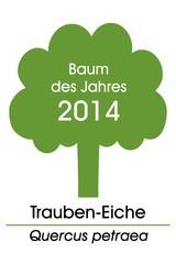 Baum des Jahres 2014 ~ Trauben-Eiche / Quercus petraea