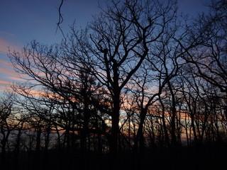 Силуэты деревьев без листьев на фоне сине-розового заката