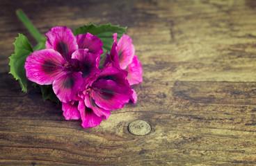 Vivid pink geraniums on a vintage wood background