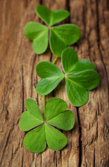 Three lucky irish shamrock on a vintage wood background