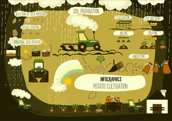 Potato cultivation, infographics