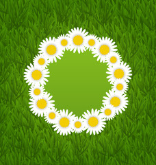 Spring freshness card with grass and camomiles flowers