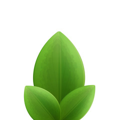 Illustration of plant three realistic  green leaves isolated on