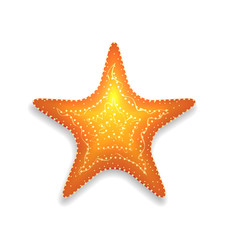 Orange starfish with shadow isolated on white background