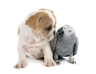 parrot and puppy