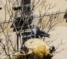 Pigeons and fountain