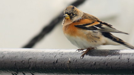 small bird in the wind