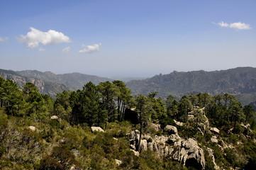 Forêt de l'Ospedale, Corse