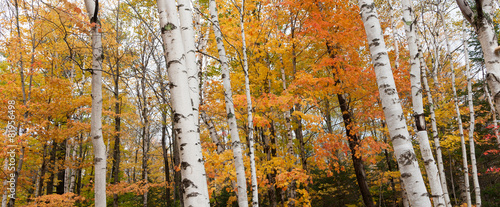 New Engalnd forest fall colors.