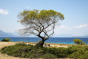 green tree on the background of the sea