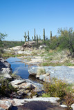 Intermittent stream in the Sonoran Desert. Saguaro National Park poster