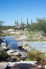 Intermittent stream in the Sonoran Desert. Saguaro National Park