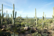 Leinwanddruck Bild - Landscapes Saguaro National Park, Arizona, USA