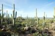 Leinwandbild Motiv Landscapes Saguaro National Park, Arizona, USA