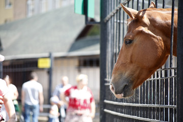 Horse in zoo cage
