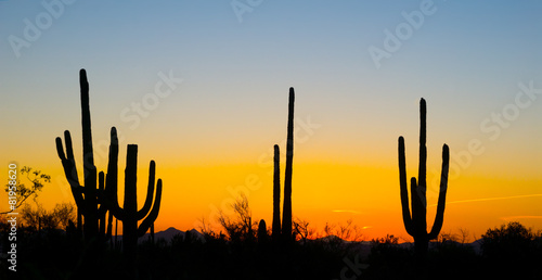 Fotobehang Arizona Landscape at sunset in Saguaro National Park, Arizona, USA