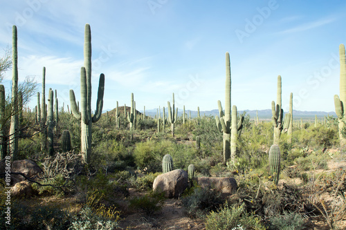 Leinwanddruck Bild Landscapes Saguaro National Park, Arizona, USA