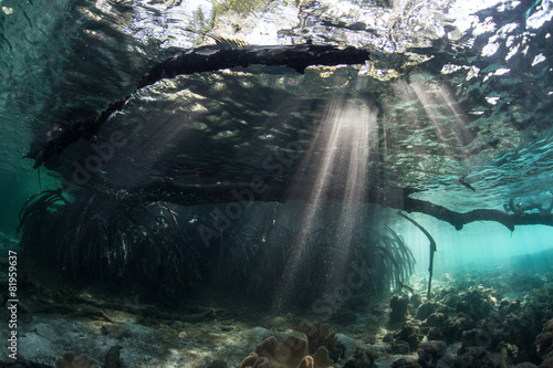 Leinwanddruck Bild Beams of Light and Mangrove Underwater