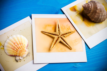 Instant Frame of Seashells and Starfish