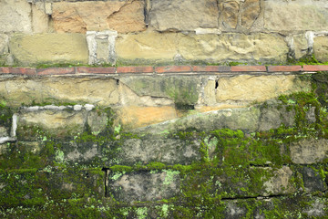 moss on the old rok wall