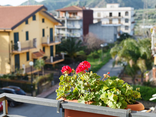 flower geranium in pot on balcony of urban house