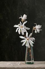Bouquet of star magnolia. (Magnolia Stellata)