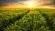 Leinwanddruck Bild - Feld führt zur untergehenden Sonne