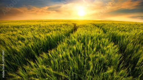Poster Cultuur Feld führt zur untergehenden Sonne