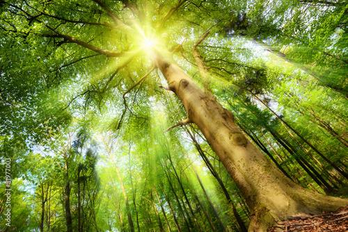 Keuken foto achterwand Bomen Sonne im Zauberwald