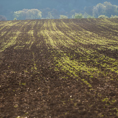 field on a spring morning with shallow depth of field