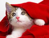 cute kitten - 81977642