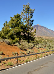 teide road 1