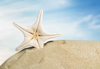 Cancun. Shells on the beach