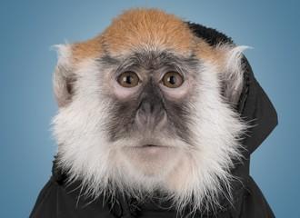 Monkey. Vervet Monkey - Chlorocebus pygerythrus
