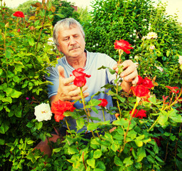 Man caring for roses in the garden