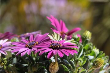 Blumige Grüße aus dem Garten